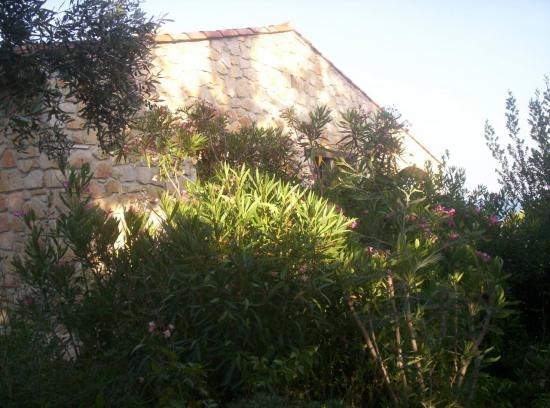 The side of the garden near the children bed-room