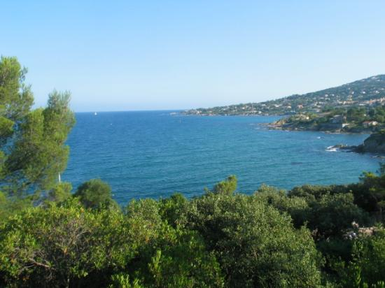the mediterranee between trees and the west-cost and the beach